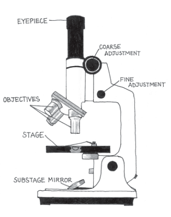 how to draw a compound microscope step by step